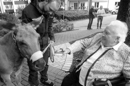 Ein Esel zu Besuch im Altenheim-Park